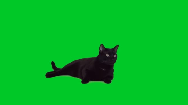 4k black cat lying down on green screen - green background stock videos & royalty-free footage