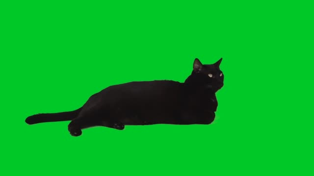 4k black cat lying down on green screen - black colour stock videos & royalty-free footage