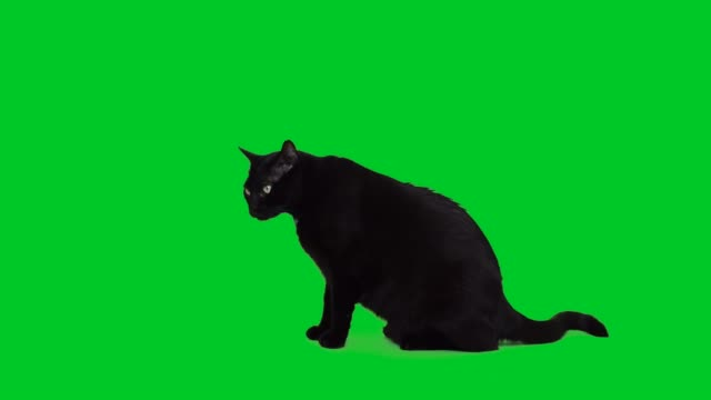 4k black cat sitting on green screen - green background stock videos & royalty-free footage
