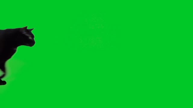 4k black cat walking on green screen - green background stock videos & royalty-free footage