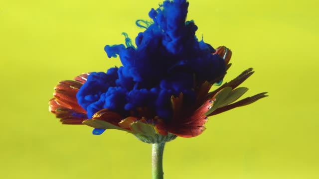 vídeos de stock e filmes b-roll de 4k blue ink drop into flower. - cor isolada