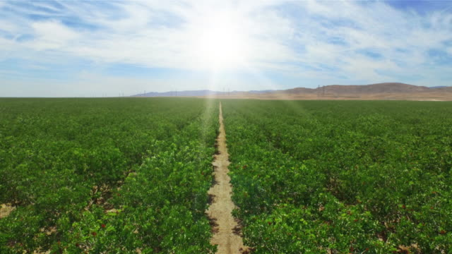 4k California Orange Orchard Tree Rows Rising Jib Shot