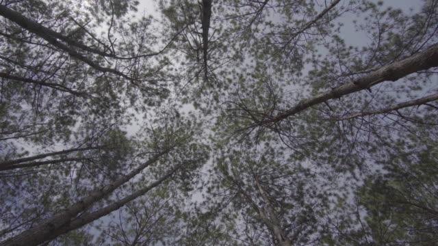 4 k cámara panorámica del bosque por la mañana.