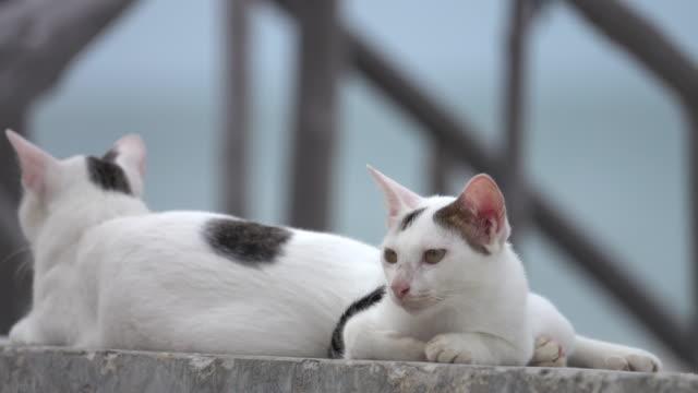 4k: les chats sont assis devant une vue sur la mer