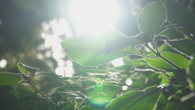 4 k は、森の中に落ちる太陽の光のショットを閉じます。