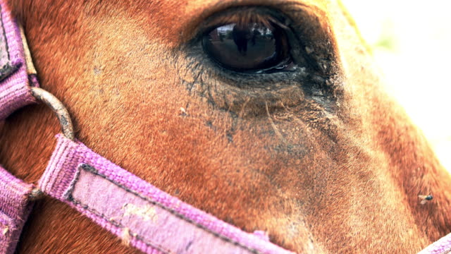 4k Close up view of the eye of a beautiful brown horse.