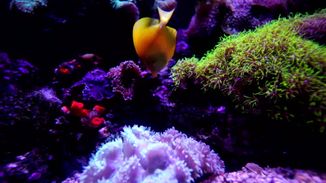4k colorful fishes and corals in the aquarium - aquarium stock videos & royalty-free footage
