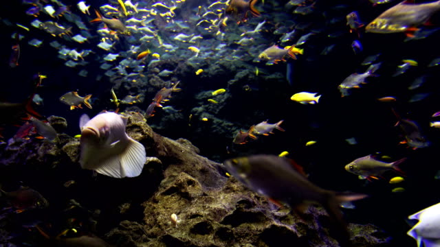 4k colorful fishes and corals in the aquarium - cape coral stock videos & royalty-free footage