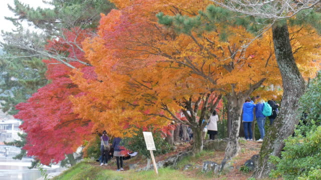 4k colourful maple leaves - satoyama scenery stock videos & royalty-free footage