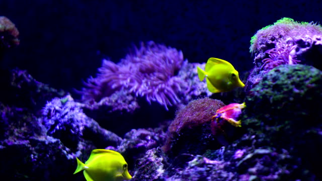 4k coral colony on the reef - aquarium stock videos & royalty-free footage