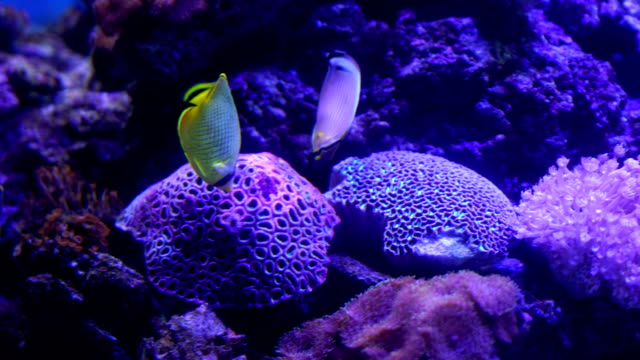 4k coral colony on the reef - undersea stock videos & royalty-free footage