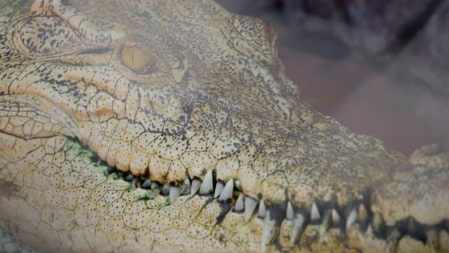 4k: crocodiles - reptile stock videos & royalty-free footage