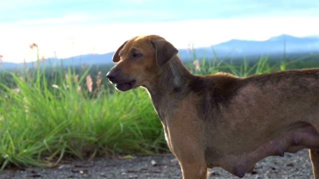 4k dog hunger barking. - barking animal sound stock videos & royalty-free footage