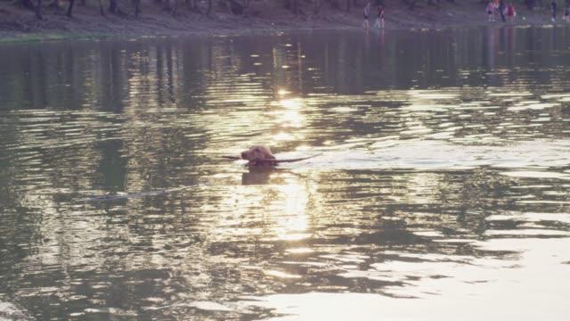 4k, dog in lake - red lake stock videos & royalty-free footage