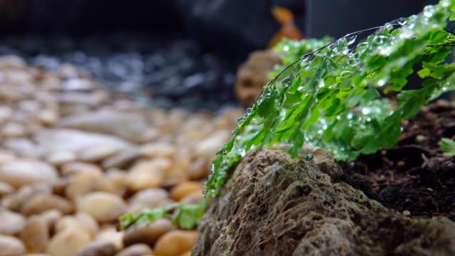 4 k dolly schuss: grün natur - teich stock-videos und b-roll-filmmaterial
