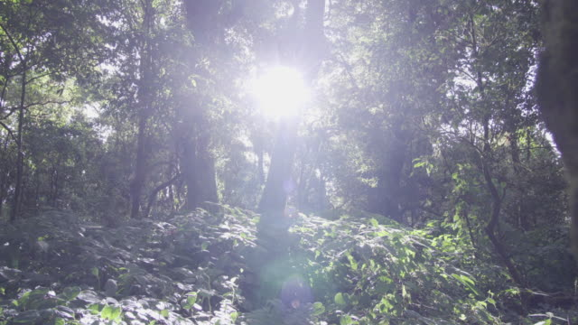 4k dolly shot of sunlight falling through forest. - ethereal stock videos & royalty-free footage