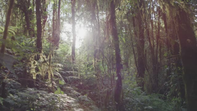 vídeos de stock e filmes b-roll de 4k dolly shot ,tropical rain forest nature trail - árvore tropical