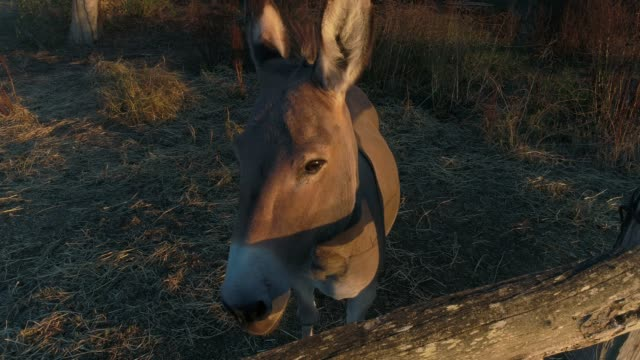 4k donkey in sunlight