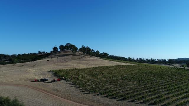 4k drone pov flight over harvest at vineyard, heathcote, australia - crop stock videos & royalty-free footage