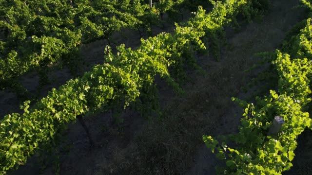 vídeos de stock, filmes e b-roll de 4k drone pov flight over vineyard, heathcote, australia - brightly lit