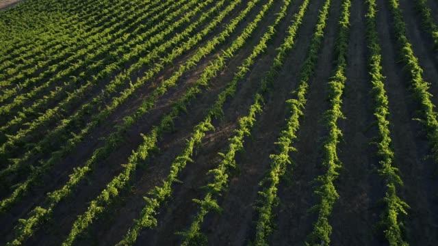 vídeos y material grabado en eventos de stock de 4k drone pov flight over vineyard, heathcote, australia - brightly lit