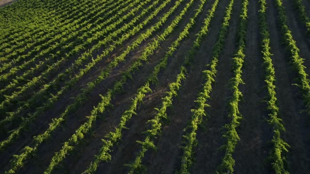 4k drone pov flight over vineyard, heathcote, australia - brightly lit点の映像素材/bロール