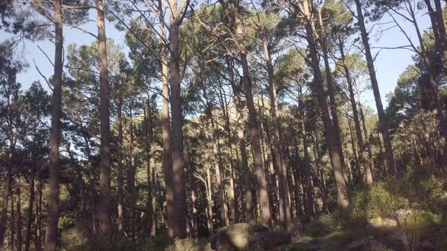 vídeos y material grabado en eventos de stock de 4k imágenes de drones de árboles en el bosque - pinar