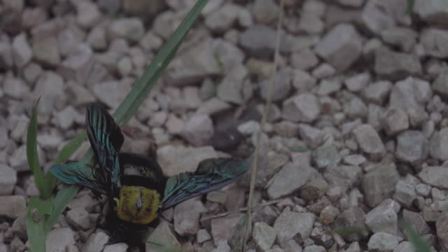 4k: Dying Wasp on the Floor with Ants eating