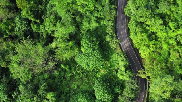4k footage of aerial or drone point of view of local road in the forest. transportation and travel concept. - top garment stock videos & royalty-free footage