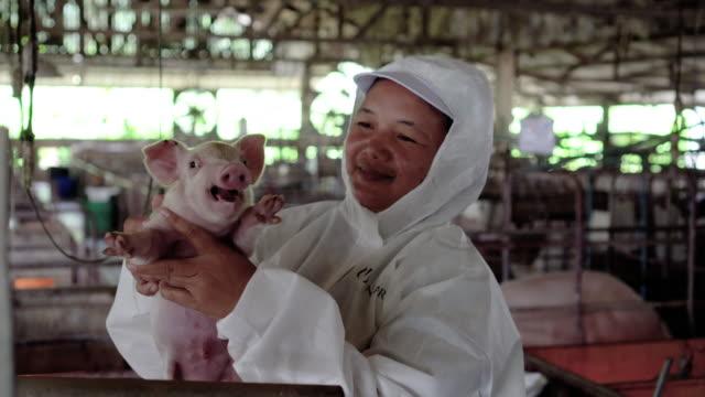 4k footage scen asiatiska veterinär ta hand och hålla en baby gris i fabriken gris gård, boskap och hus djur koncept - gris bildbanksvideor och videomaterial från bakom kulisserna