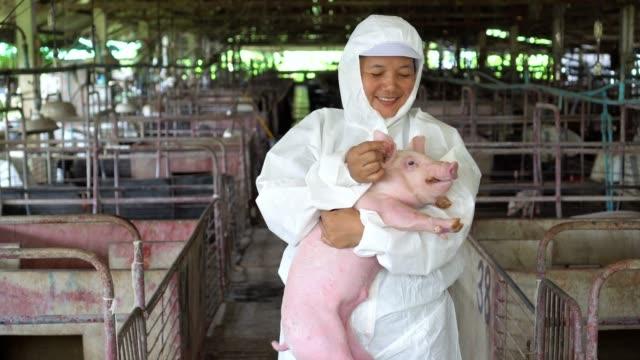 4k footage scene van de Aziatische dierenarts te nemen zorg en Pat een varken op het hoofd in de fabriek varkensboerderij, vee en huisdier concept