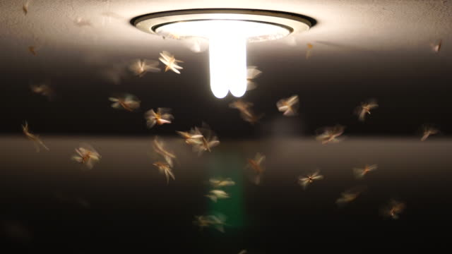 vídeos de stock e filmes b-roll de 4k footage scene of mayflies swarming and flying the light, insect and bug life concept - mosca