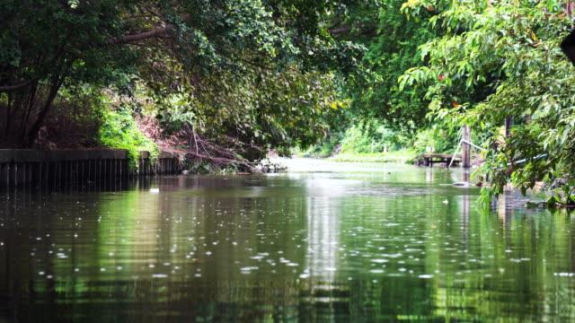 雨の 4 k 映像シーンが森林、自然と天気の概念に沿って運河の表面に落ちています。 - 雨粒点の映像素材/bロール