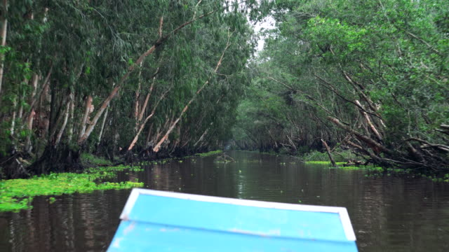 4k footage scene of traveling tra su cajuput forest bird sanctuary in the mekong delta, tinh bien district, an giang province, in southern vietnam - mekong delta stock videos & royalty-free footage