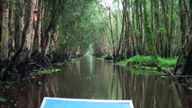 4k footage scene of traveling tra su cajuput forest bird sanctuary in the mekong delta, tinh bien district, an giang province, in southern vietnam - south vietnam stock videos & royalty-free footage