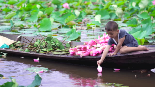 4k footage scene of vietnamese boy playing pink lotus's petal on traditional wooden boat with mom in the big lake at thap muoi, dong thap province, vietnam, culture and life concept - vietnam stock videos & royalty-free footage