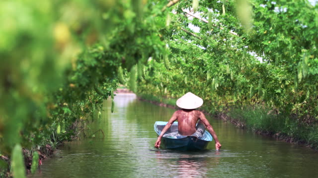 4k footage scene of vietnamese old man farmer boating for keeping the yield by traditional boat over the lake in bitter gourd garden in vietnam style, an phu, an giang province, vietnam, vegetable garden and farm concept - zucca legenaria video stock e b–roll