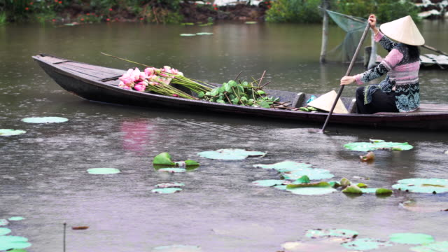 4k footage scene of vietnamese woman rowing traditional wooden boat with the pink lotus and lotus pod while raining in the big lake at thap muoi, dong thap province, vietnam, culture and life concept - hat stock videos and b-roll footage