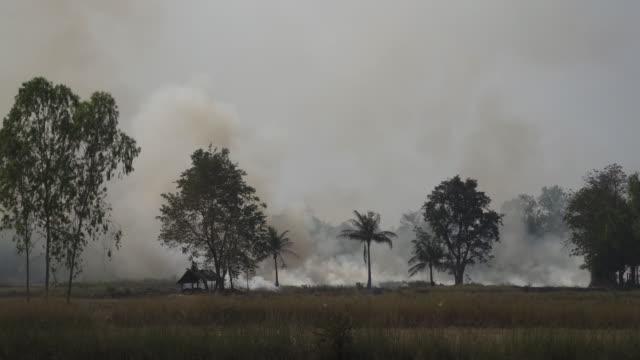 4k forest fire or slash and burn agriculture concept.