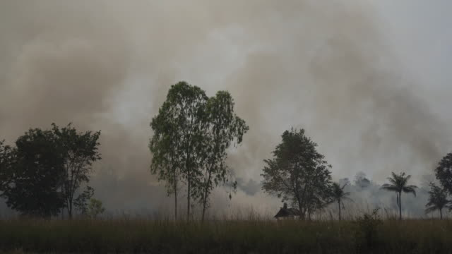 4k forest fire or slash and burn agriculture concept. - air pollution stock videos & royalty-free footage