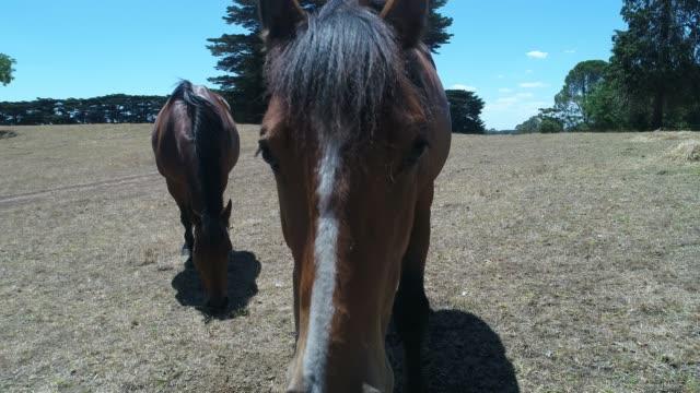 4k horses grazing