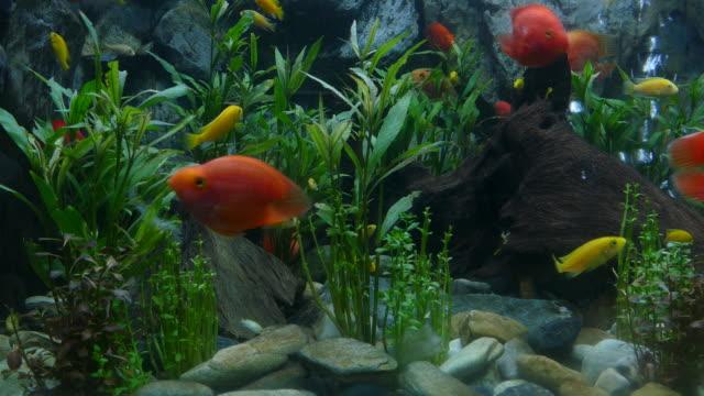 4k: Life of beautiful fish underwater in farm.