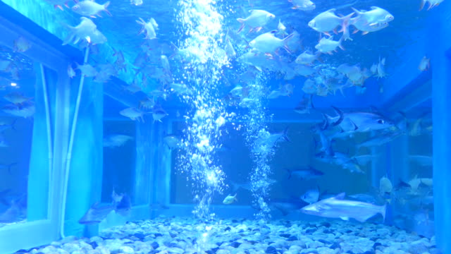4k: Life of fish underwater in farm.