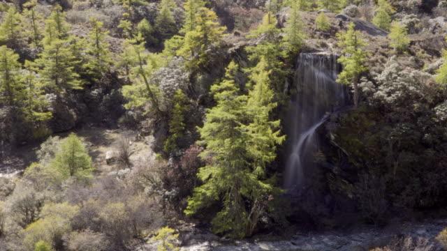 4k; long exposure waterfall in autumn season. - pine tree stock videos & royalty-free footage