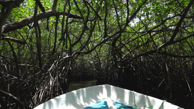 4k mongrove forrest boat tour in sri lanka - sri lanka stock videos & royalty-free footage