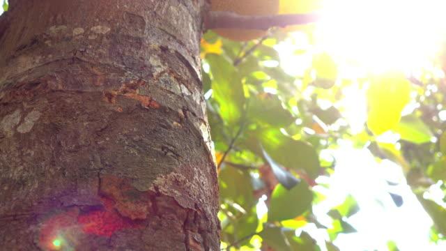 4k natural scene, Tree truck with sunlight