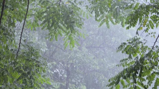 青々 とした葉の背景で大雨の 4 k。 - moving down点の映像素材/bロール