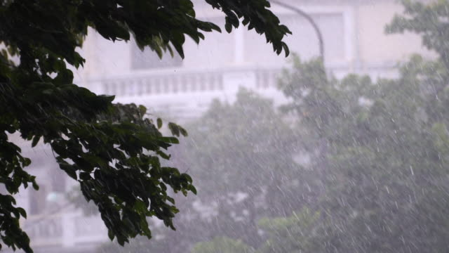 ツリーの背景色と重い雨の日の 4 k。 - 集中豪雨点の映像素材/bロール