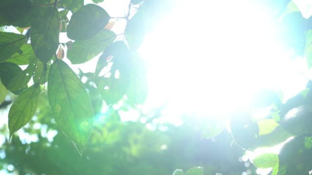 日光の梢を通って落下の 4 k。 - 枝点の映像素材/bロール