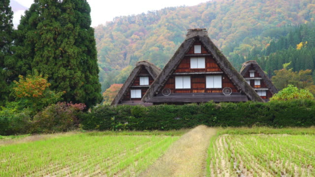 4k panning: Three gassho house at Shirakawago village in autumn season, Gifu, Japan.